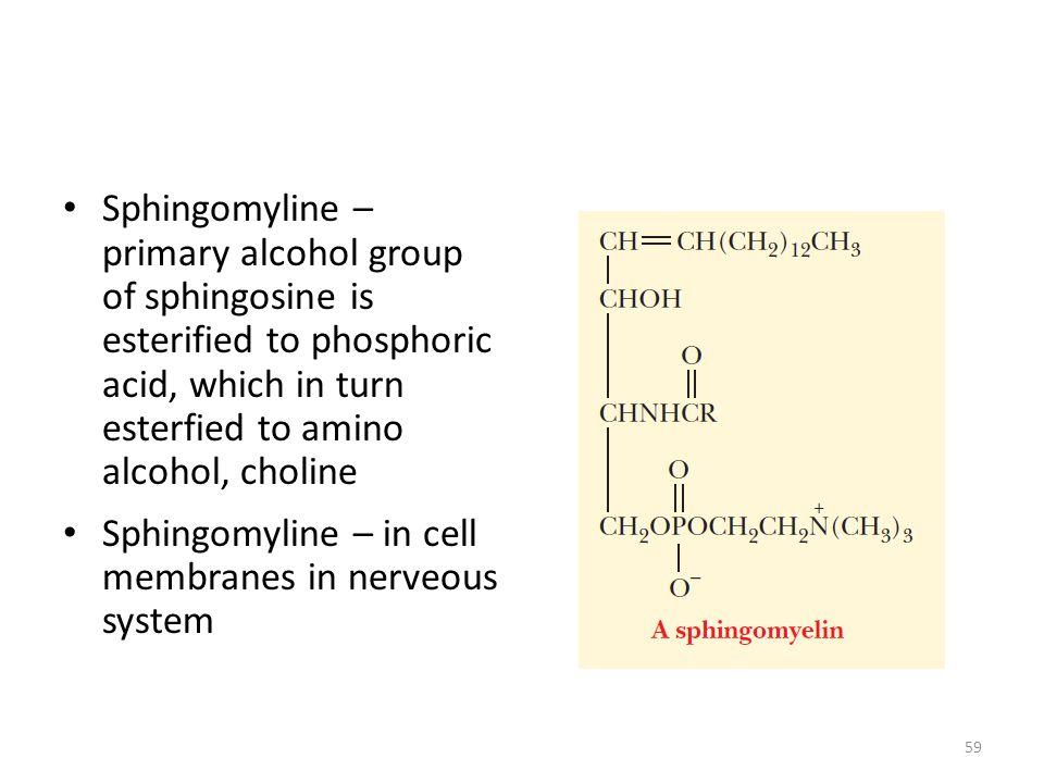 Sphingomyline – primary alcohol group of sphingosine is esterified to phosphoric acid, which in turn esterfied to amino alcohol, choline Sphingomyline