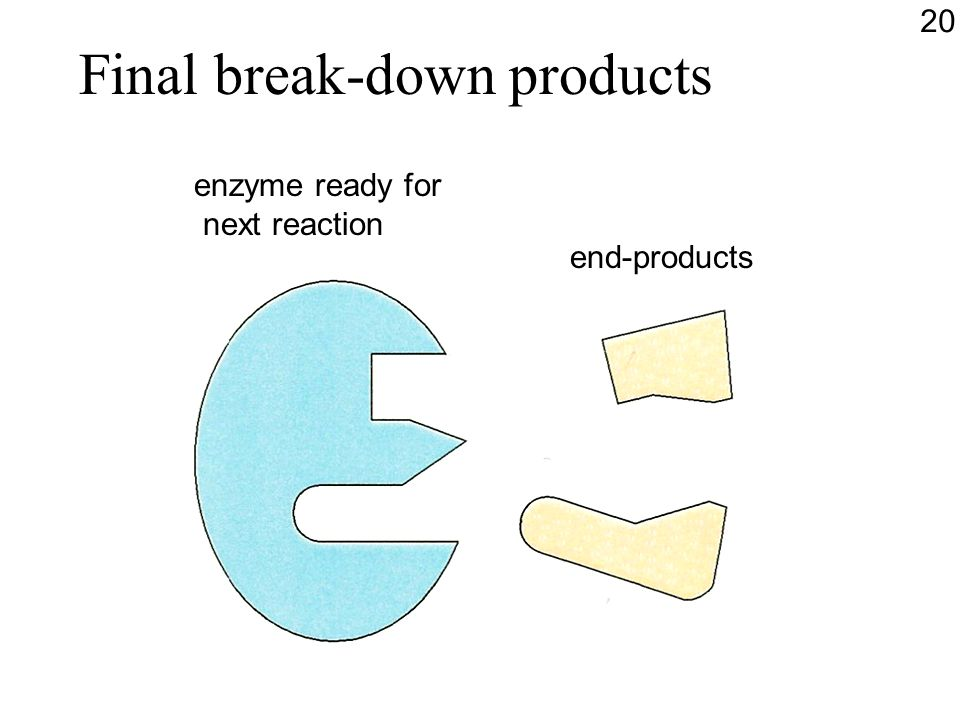 Final break-down products end-products enzyme ready for next reaction 20