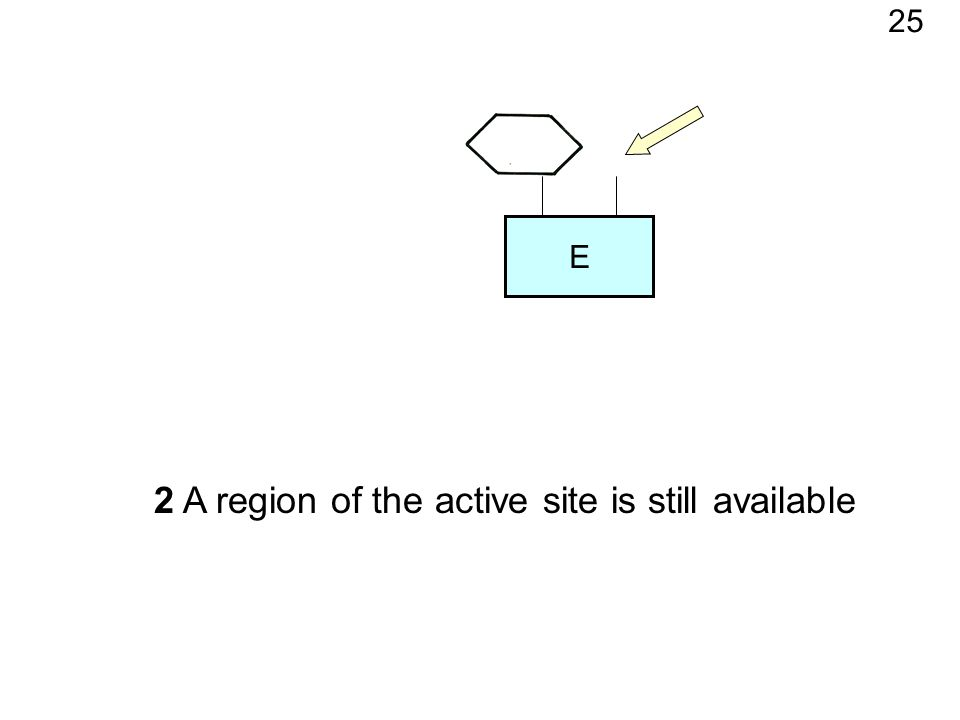 E 2 A region of the active site is still available 25