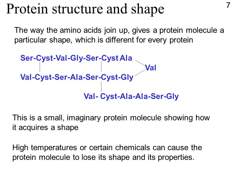 Protein structure and shape The way the amino acids join up, gives a protein molecule a particular shape, which is different for every protein Ser-Cyst-Val-Gly-Ser-Cyst Ala Val Val-Cyst-Ser-Ala-Ser-Cyst-Gly Val- Cyst-Ala-Ala-Ser-Gly This is a small, imaginary protein molecule showing how it acquires a shape High temperatures or certain chemicals can cause the protein molecule to lose its shape and its properties.