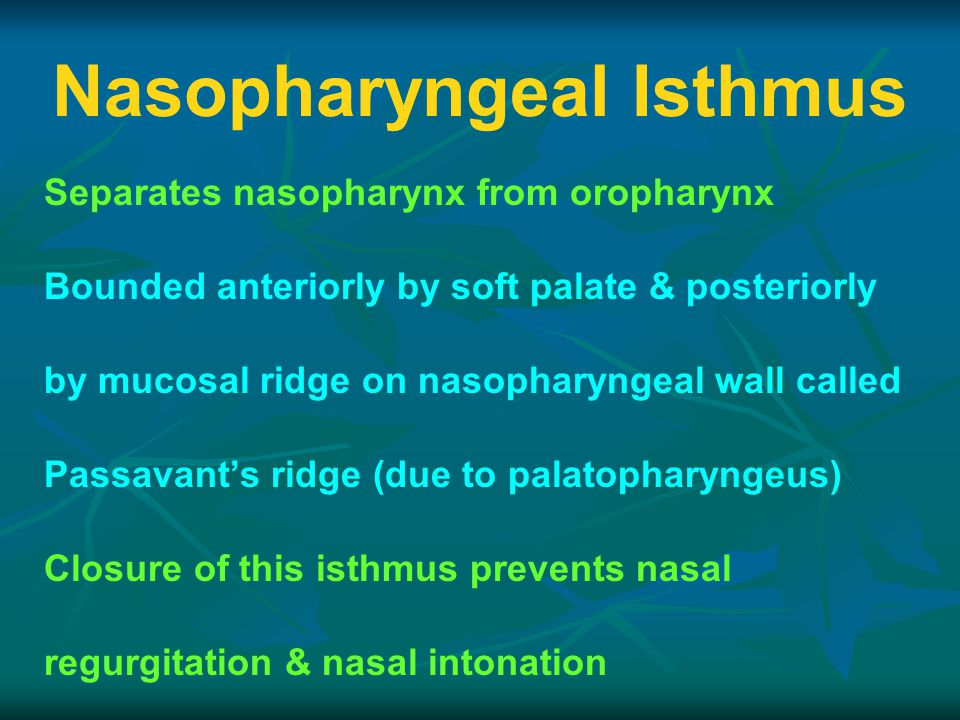 Nasopharyngeal Isthmus Separates nasopharynx from oropharynx Bounded anteriorly by soft palate & posteriorly by mucosal ridge on nasopharyngeal wall called Passavant's ridge (due to palatopharyngeus) Closure of this isthmus prevents nasal regurgitation & nasal intonation