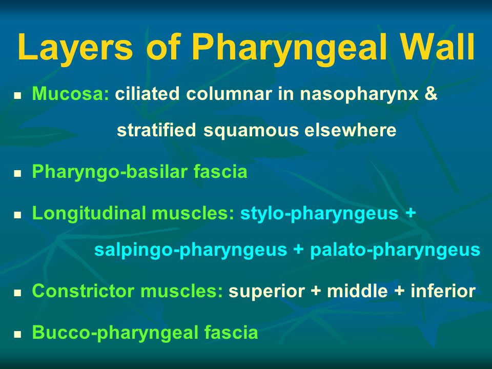 Layers of Pharyngeal Wall Mucosa: ciliated columnar in nasopharynx & stratified squamous elsewhere Pharyngo-basilar fascia Longitudinal muscles: stylo-pharyngeus + salpingo-pharyngeus + palato-pharyngeus Constrictor muscles: superior + middle + inferior Bucco-pharyngeal fascia