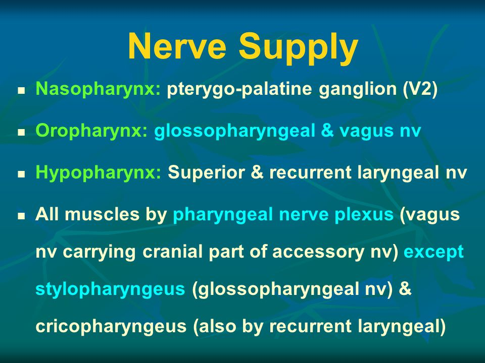 Nerve Supply Nasopharynx: pterygo-palatine ganglion (V2) Oropharynx: glossopharyngeal & vagus nv Hypopharynx: Superior & recurrent laryngeal nv All muscles by pharyngeal nerve plexus (vagus nv carrying cranial part of accessory nv) except stylopharyngeus (glossopharyngeal nv) & cricopharyngeus (also by recurrent laryngeal)