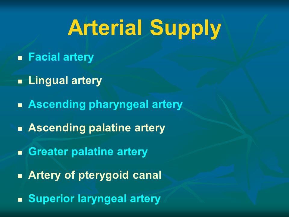 Arterial Supply Facial artery Lingual artery Ascending pharyngeal artery Ascending palatine artery Greater palatine artery Artery of pterygoid canal Superior laryngeal artery