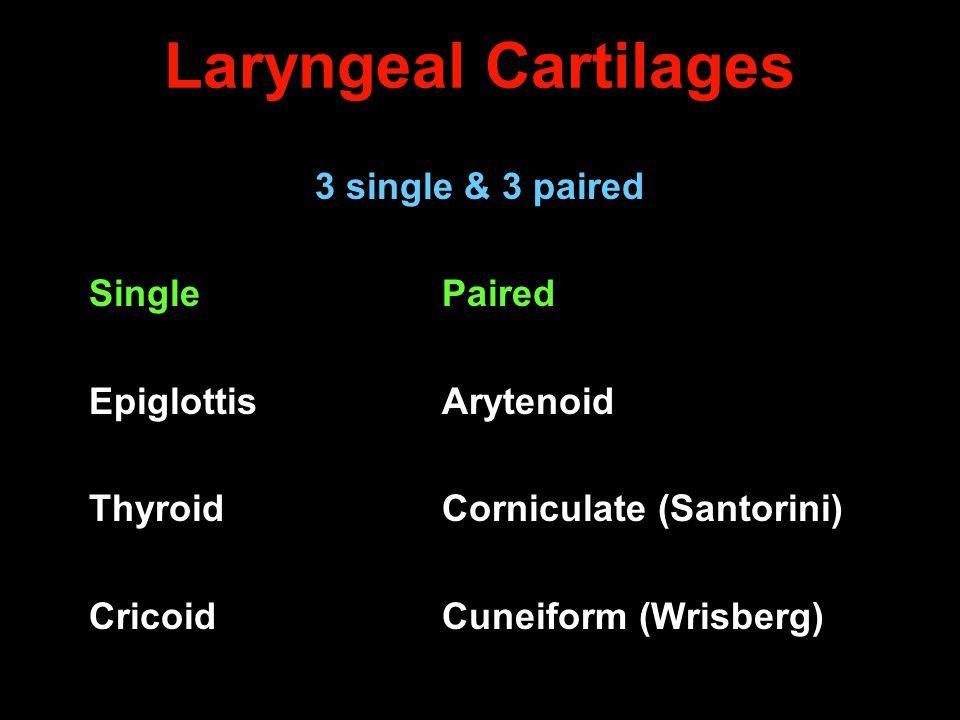 Laryngeal Cartilages 3 single & 3 paired SinglePaired Epiglottis Arytenoid ThyroidCorniculate (Santorini) CricoidCuneiform (Wrisberg)