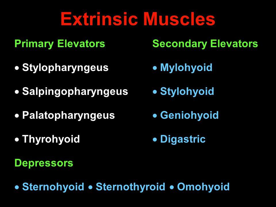 Extrinsic Muscles Primary ElevatorsSecondary Elevators  Stylopharyngeus  Mylohyoid  Salpingopharyngeus  Stylohyoid  Palatopharyngeus  Geniohyoid