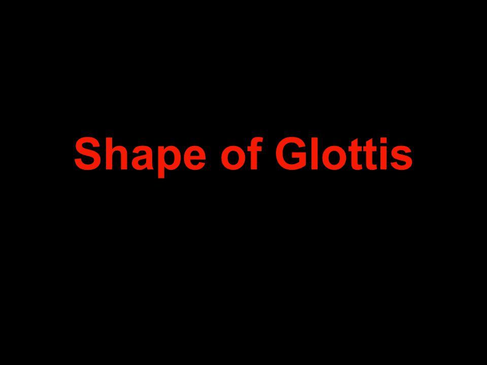 Shape of Glottis