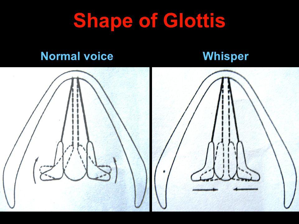 Shape of Glottis Normal voiceWhisper