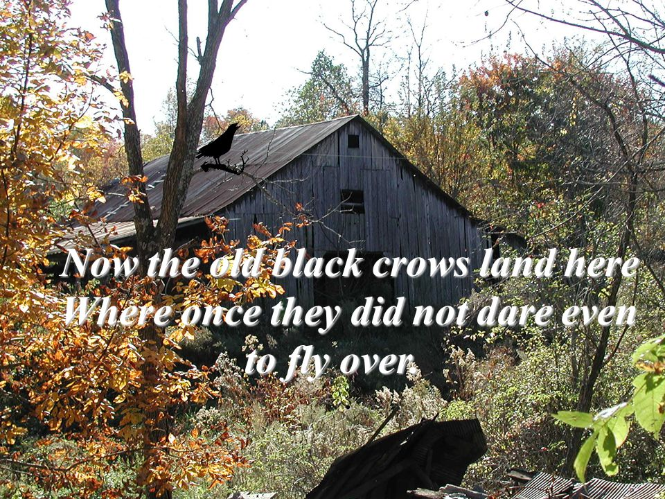 Now the old black crows land here Where once they did not dare even to fly over..
