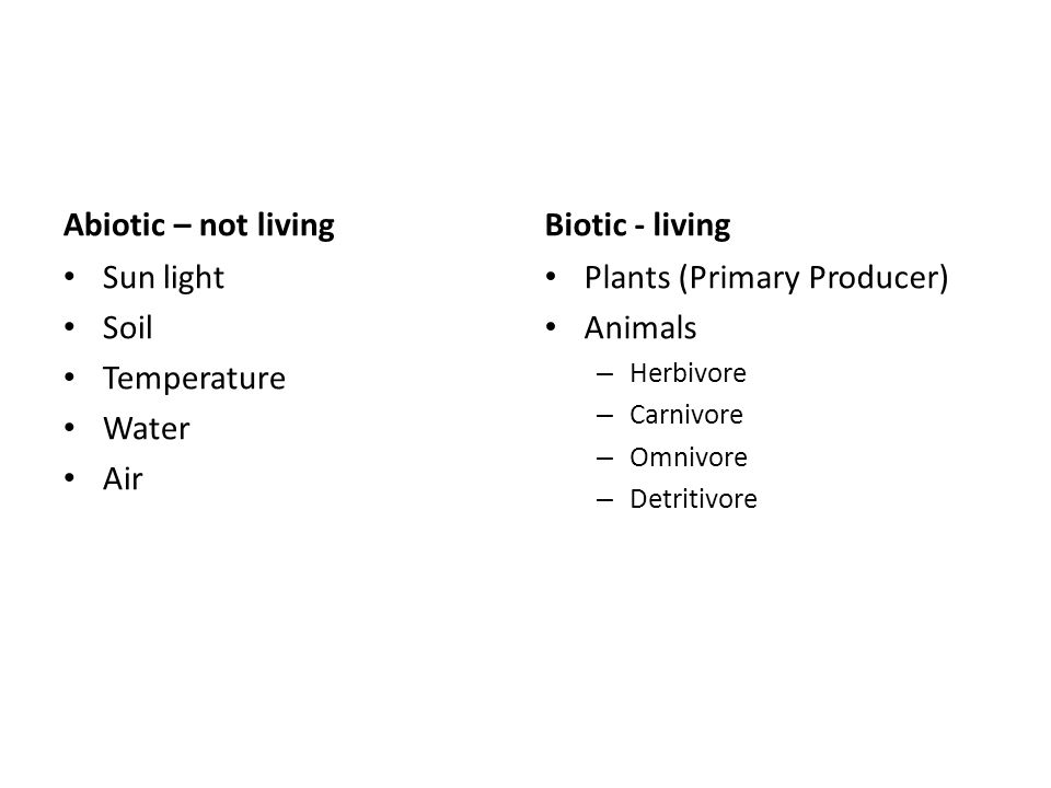 Abiotic – not living Sun light Soil Temperature Water Air Biotic - living Plants (Primary Producer) Animals – Herbivore – Carnivore – Omnivore – Detritivore