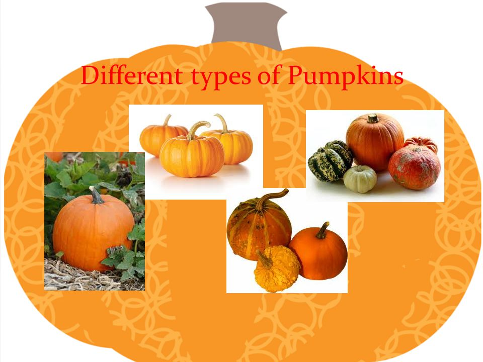 Different types of Pumpkins