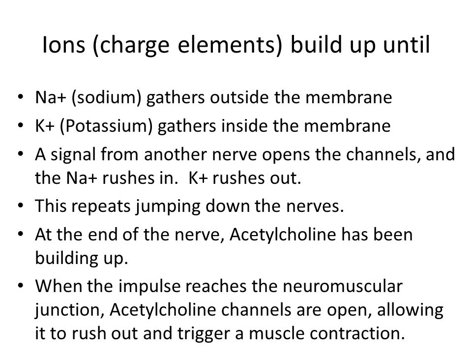 Ions (charge elements) build up until Na+ (sodium) gathers outside the membrane K+ (Potassium) gathers inside the membrane A signal from another nerve opens the channels, and the Na+ rushes in.