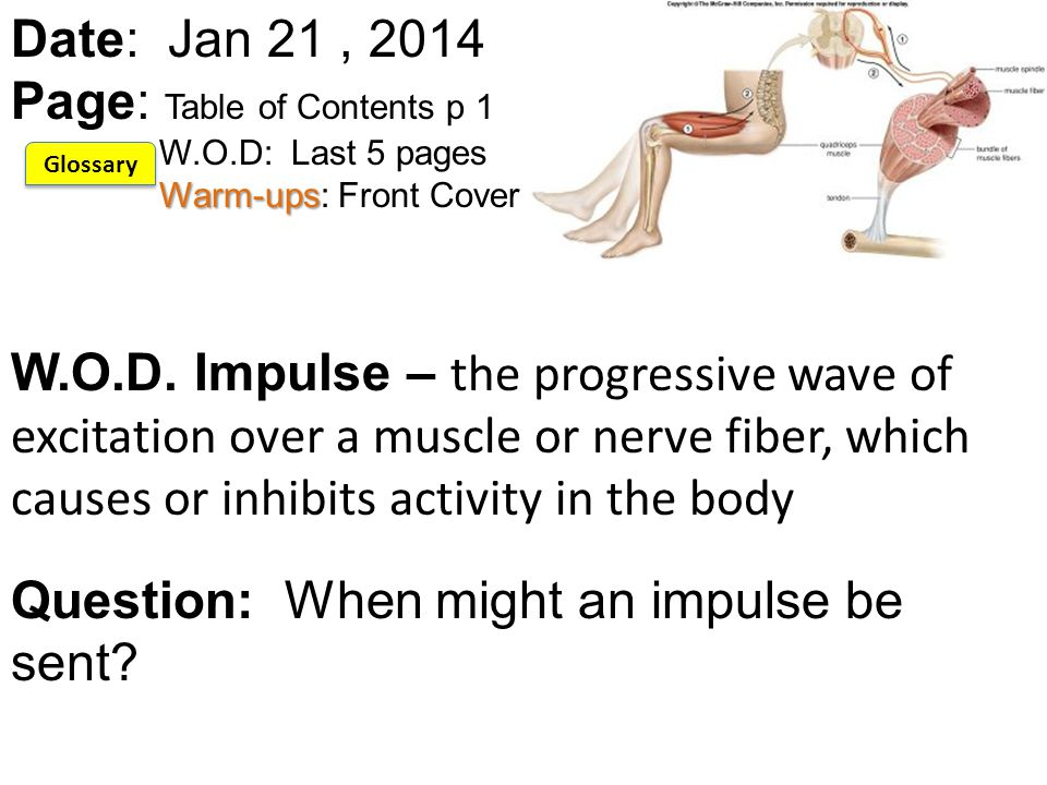 Today's Plan Warm-up Breathe Review of Muscle Lab Action potential notes Reflect *Mid-tri is Friday.