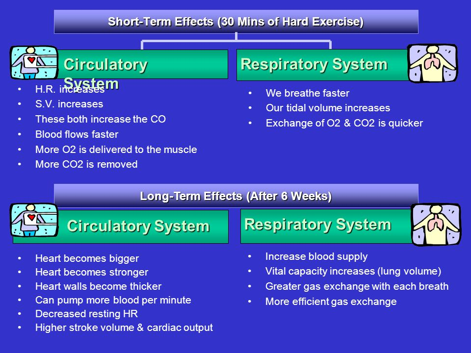 Short-Term Effects (30 Mins of Hard Exercise) Circulatory System H.R. increases S.V. increases These both increase the CO Blood flows faster More O2 i