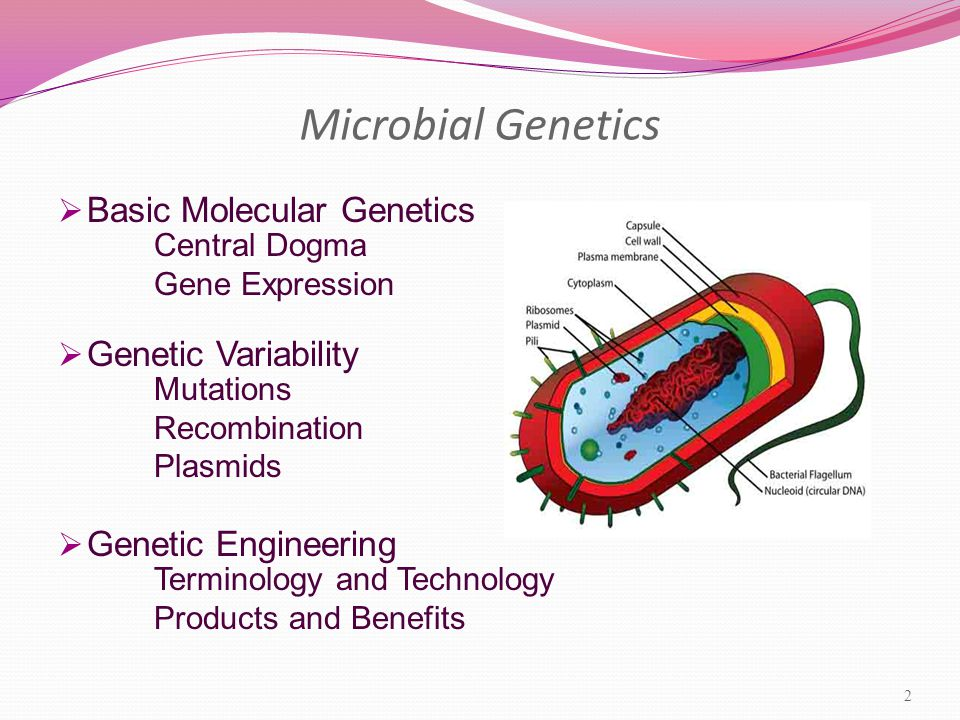 Microbial Genetics  Basic Molecular Genetics Central Dogma Gene Expression  Genetic Variability Mutations Recombination Plasmids  Genetic Engineering Terminology and Technology Products and Benefits 2