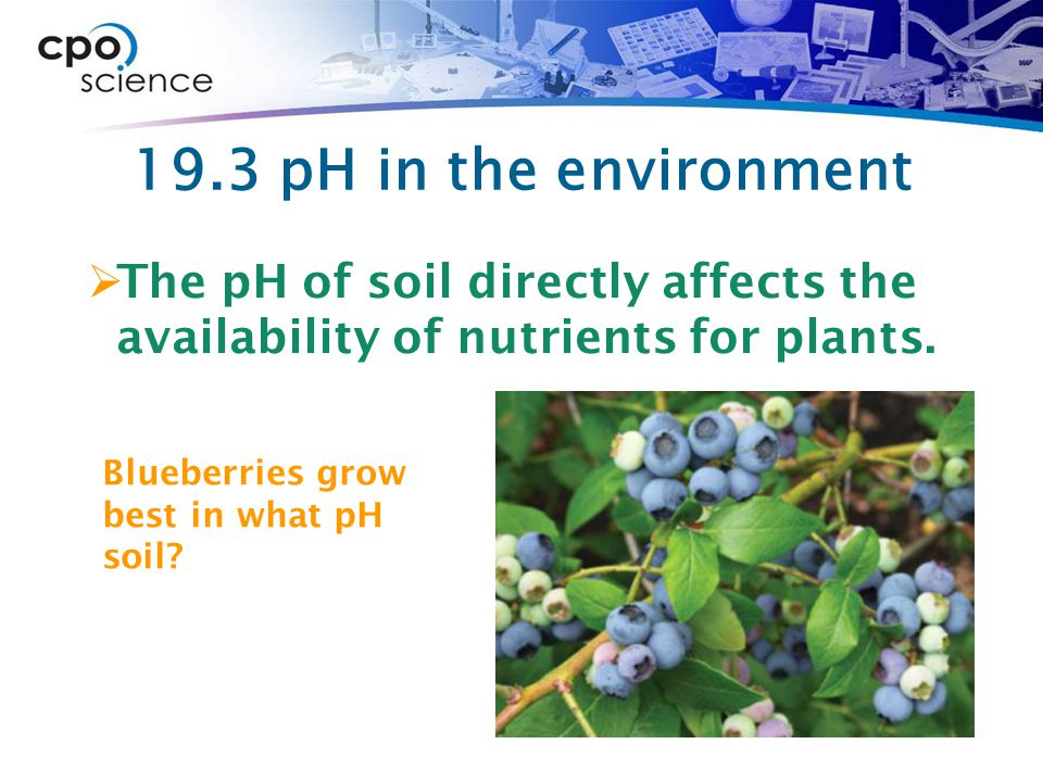 19.3 pH in the environment  The pH of soil directly affects the availability of nutrients for plants. Blueberries grow best in what pH soil?