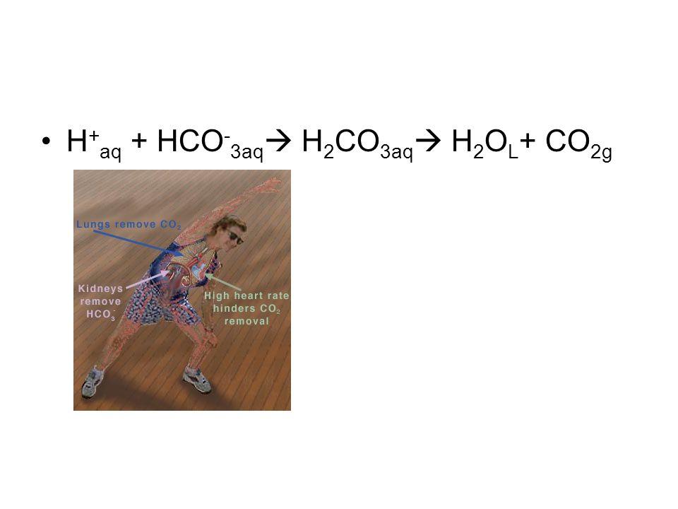 H + aq + HCO - 3aq  H 2 CO 3aq  H 2 O L + CO 2g
