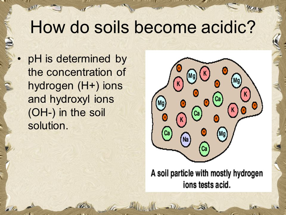 How do soils become acidic? pH is determined by the concentration of hydrogen (H+) ions and hydroxyl ions (OH-) in the soil solution.