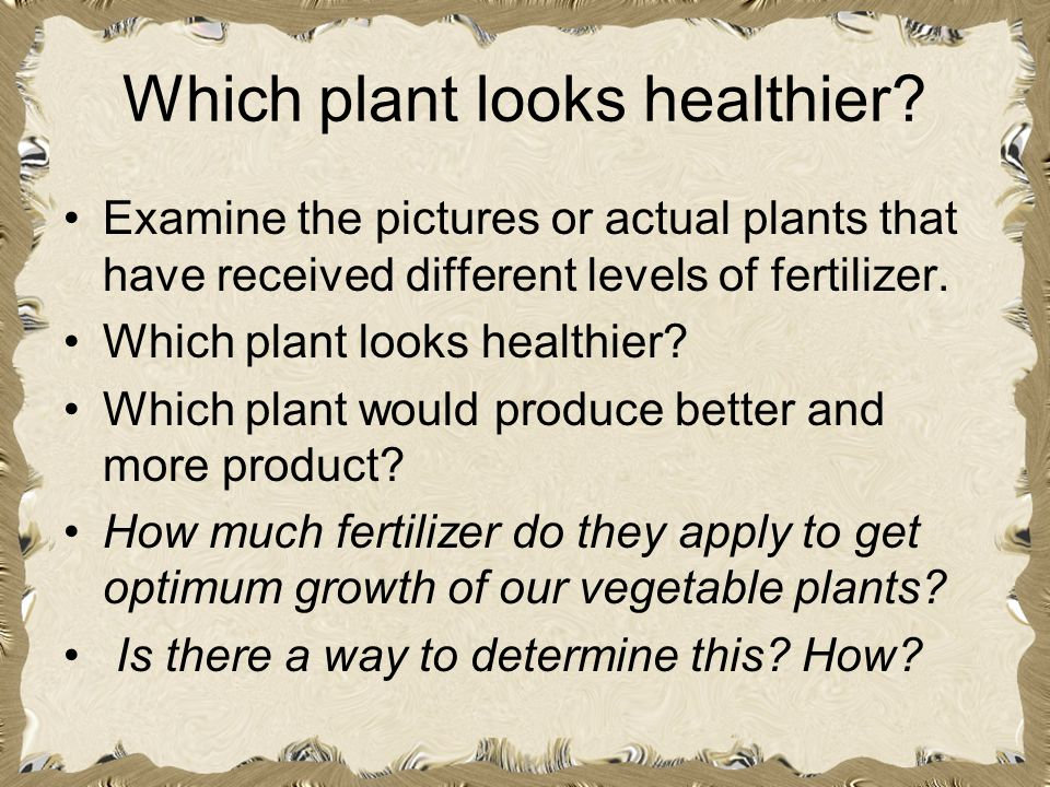 Which plant looks healthier? Examine the pictures or actual plants that have received different levels of fertilizer. Which plant looks healthier? Whi