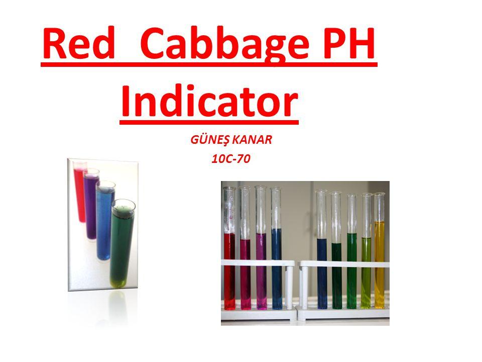 Red Cabbage PH Indicator GÜNEŞ KANAR 10C-70