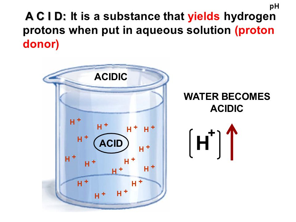BASE BASE : It is a substance that accepts hydrogen ions when put in aqueous solution (proton acceptor) pH OH - - - - - - - - WATER BECOMES BASIC BASIC