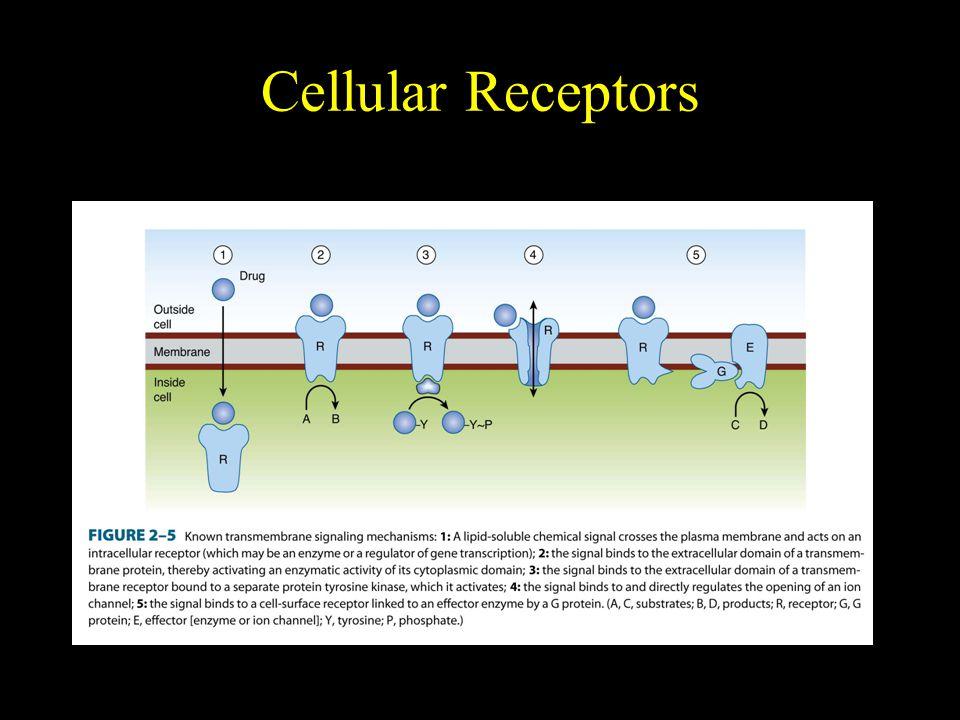 Cellular Receptors