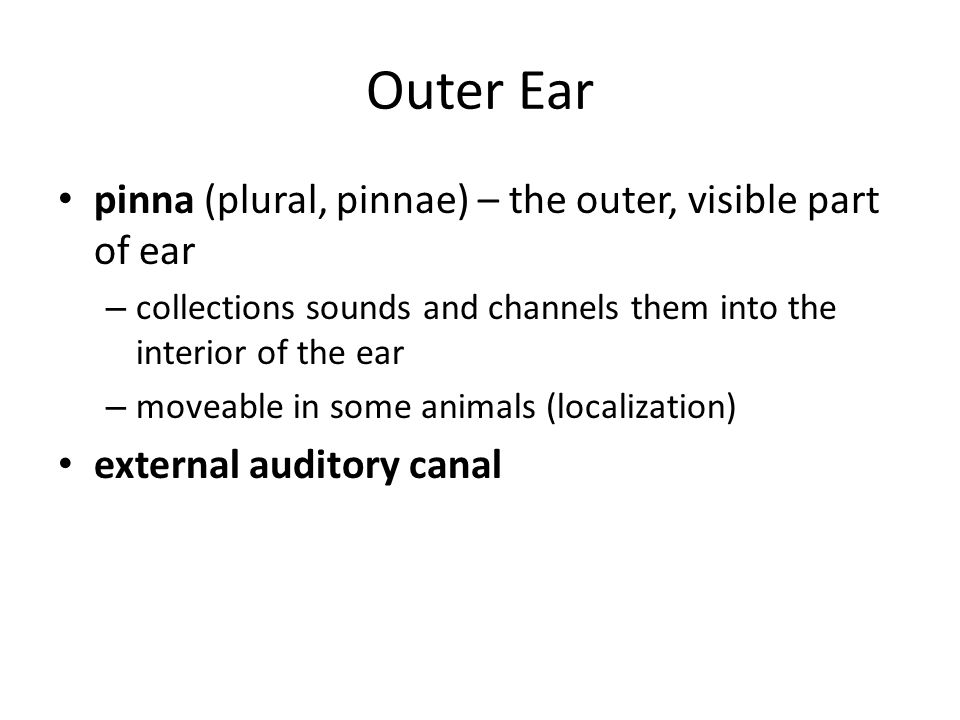 Middle Ear eardrum (tympanic membrane) – separates the outer ear from the middle ear – vibrates in response to sound hammer  anvil  stirrup – intricately connected chain of the three smallest bones in body – transmit sound waves to the fluid-filled inner ear (at oval window) by vibrating – can amplify sounds or decrease intensity to protect inner ear (muscles)