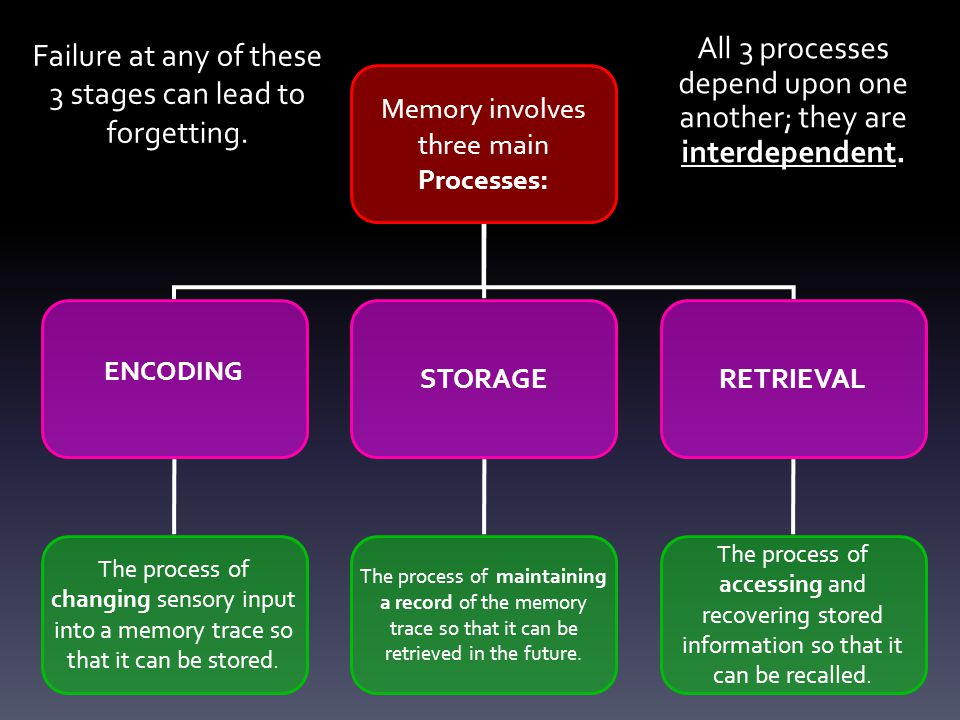 Failure at any of these 3 stages can lead to forgetting. Memory involves three main Processes: ENCODING STORAGERETRIEVAL The process of changing senso