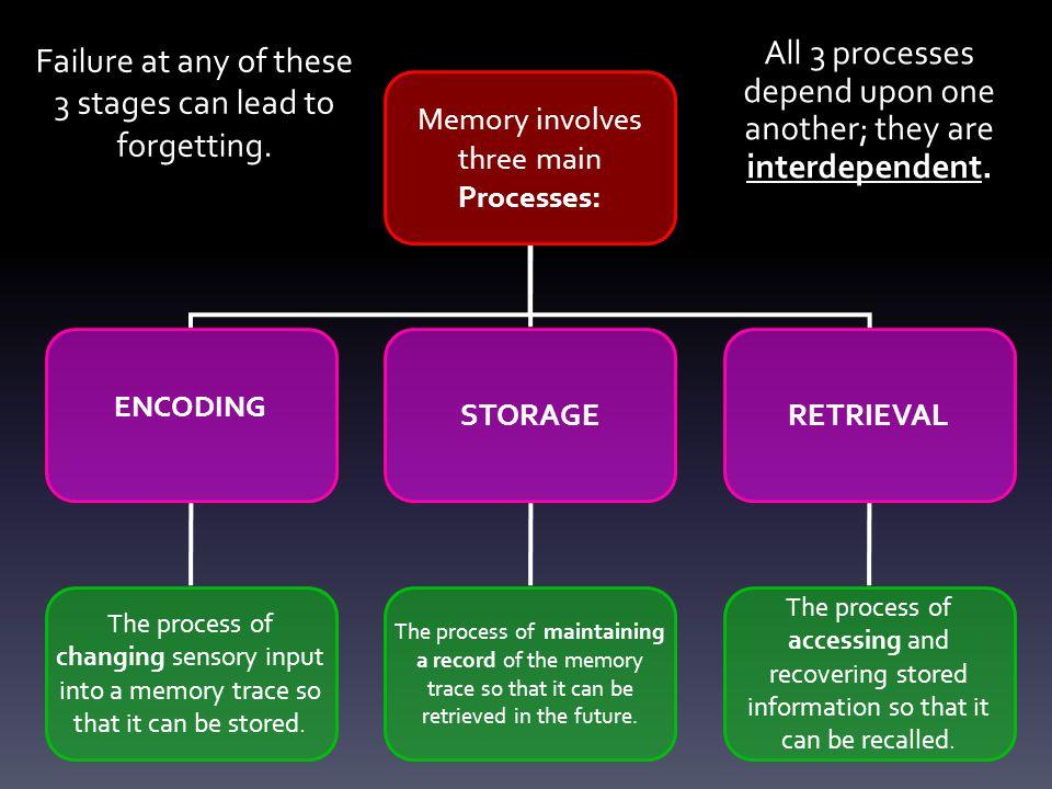 Multi-Store Model [Theory]