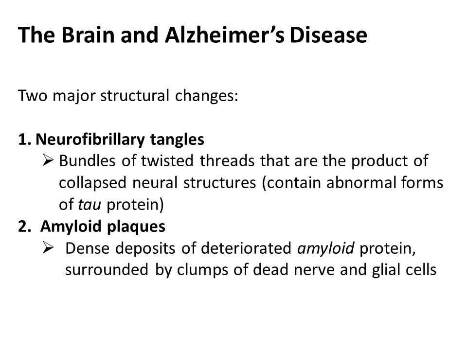 The Brain and Alzheimer's Disease Two major structural changes: 1.Neurofibrillary tangles  Bundles of twisted threads that are the product of collaps