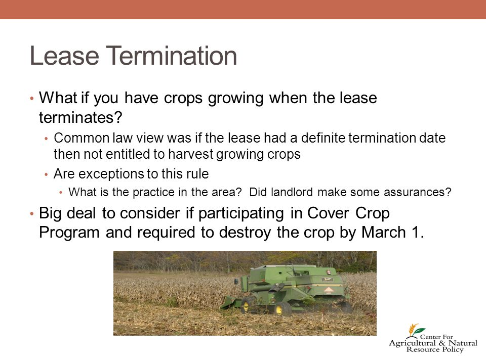 Lease Termination What if you have crops growing when the lease terminates.