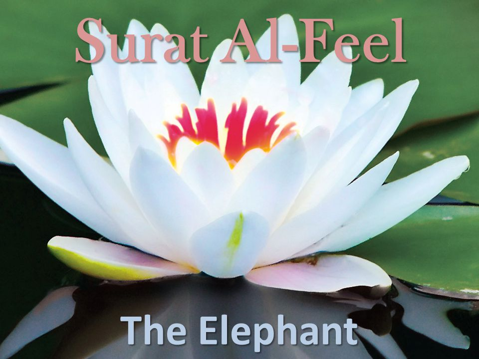 Surat Al-Feel The Elephant