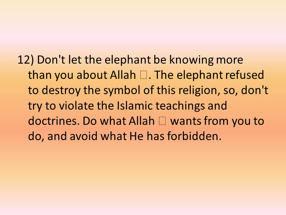 12) Don t let the elephant be knowing more than you about Allah .