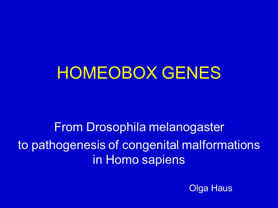 HOMEOBOX GENES From Drosophila melanogaster to pathogenesis of congenital malformations in Homo sapiens Olga Haus