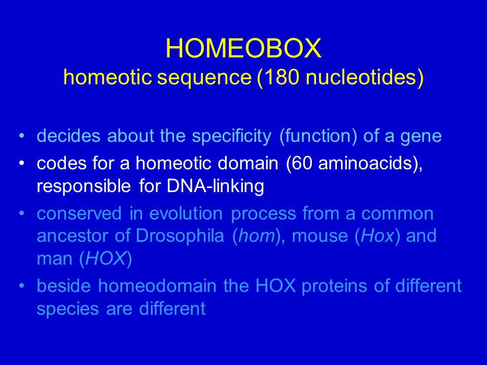 HOMEOBOX homeotic sequence (180 nucleotides) decides about the specificity (function) of a gene codes for a homeotic domain (60 aminoacids), responsible for DNA-linking conserved in evolution process from a common ancestor of Drosophila (hom), mouse (Hox) and man (HOX) beside homeodomain the HOX proteins of different species are different
