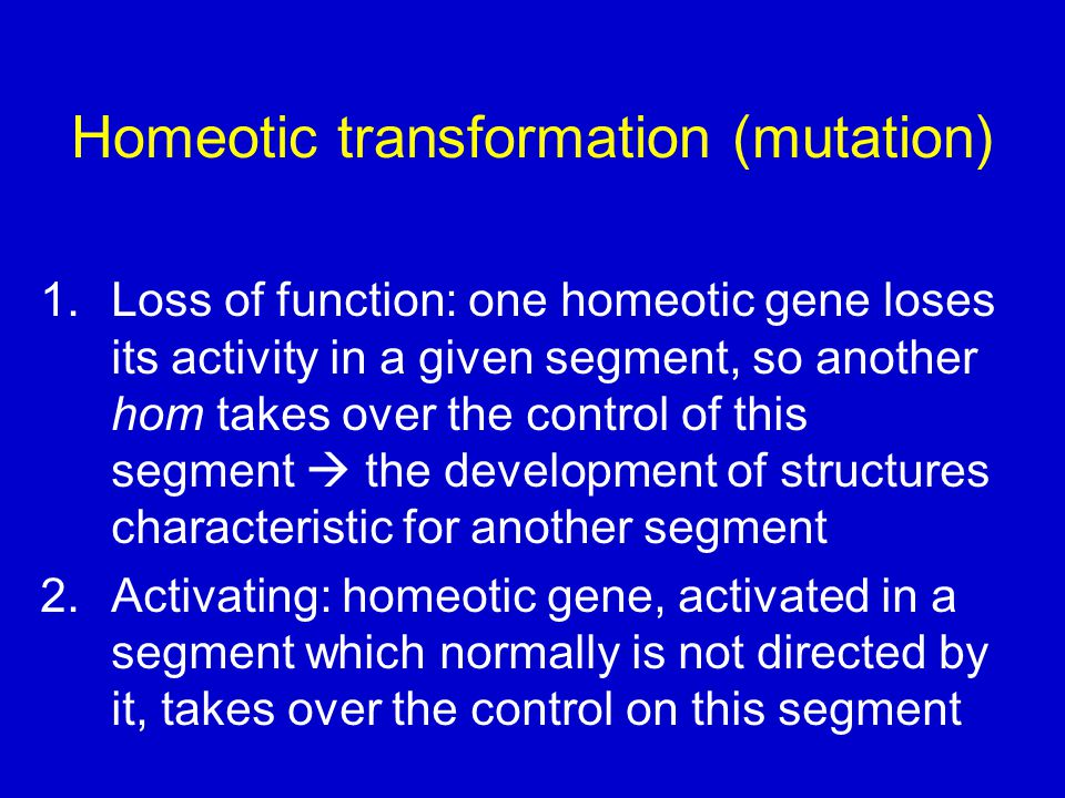 Homeotic transformation (mutation) 1.Loss of function: one homeotic gene loses its activity in a given segment, so another hom takes over the control of this segment  the development of structures characteristic for another segment 2.Activating: homeotic gene, activated in a segment which normally is not directed by it, takes over the control on this segment
