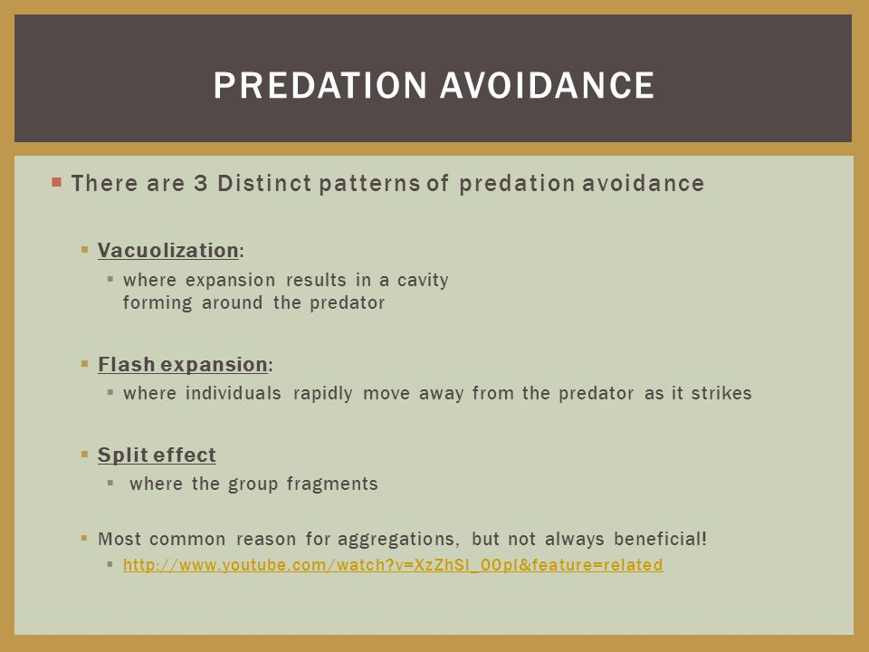  There are 3 Distinct patterns of predation avoidance  Vacuolization:  where expansion results in a cavity forming around the predator  Flash expansion:  where individuals rapidly move away from the predator as it strikes  Split effect  where the group fragments  Most common reason for aggregations, but not always beneficial.