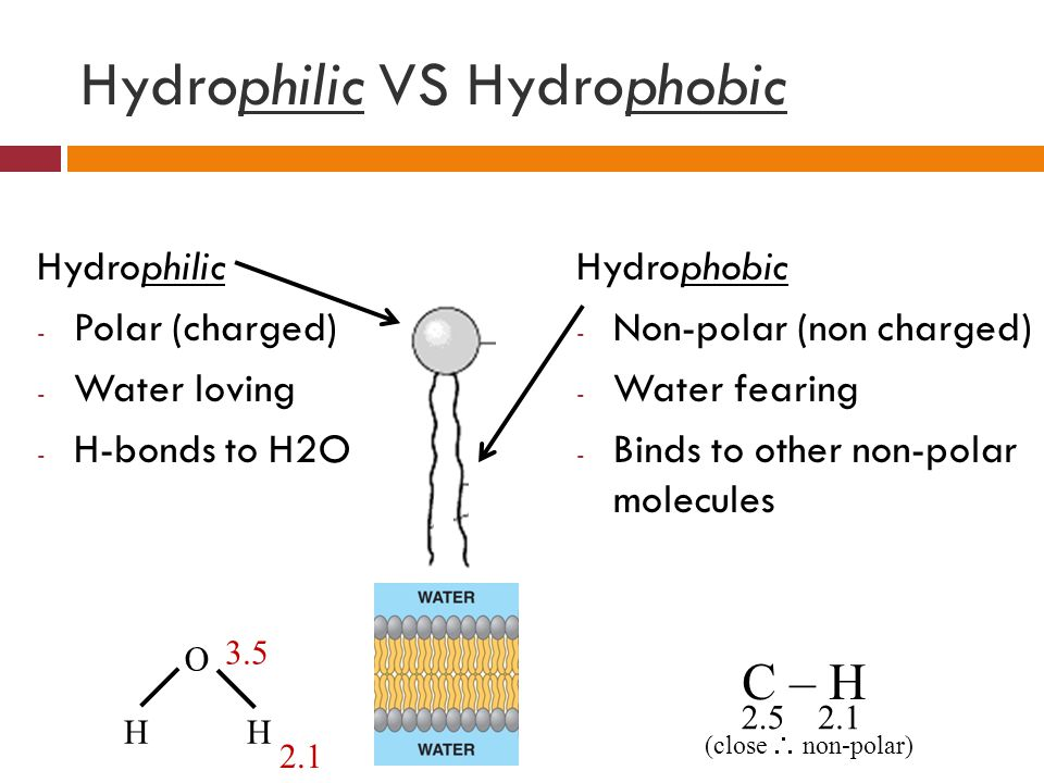 Hydrophilic VS Hydrophobic Hydrophilic - Polar (charged) - Water loving - H-bonds to H2O Hydrophobic - Non-polar (non charged) - Water fearing - Binds to other non-polar molecules C – H 2.52.1 (close  non-polar) O HH 2.1 3.5