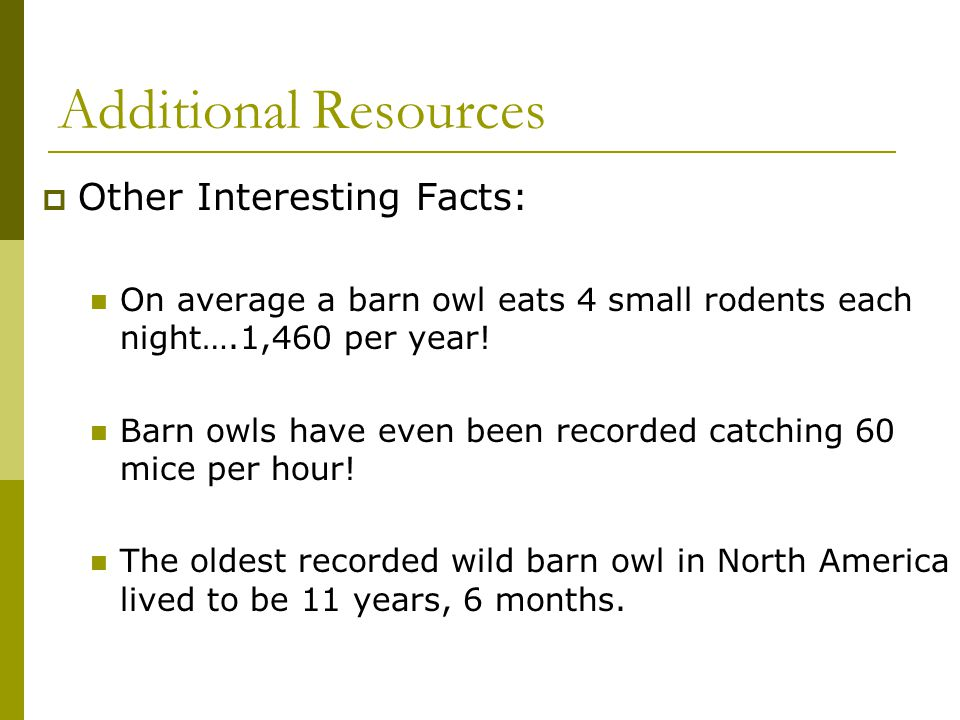 Additional Resources  Other Interesting Facts: On average a barn owl eats 4 small rodents each night….1,460 per year! Barn owls have even been record