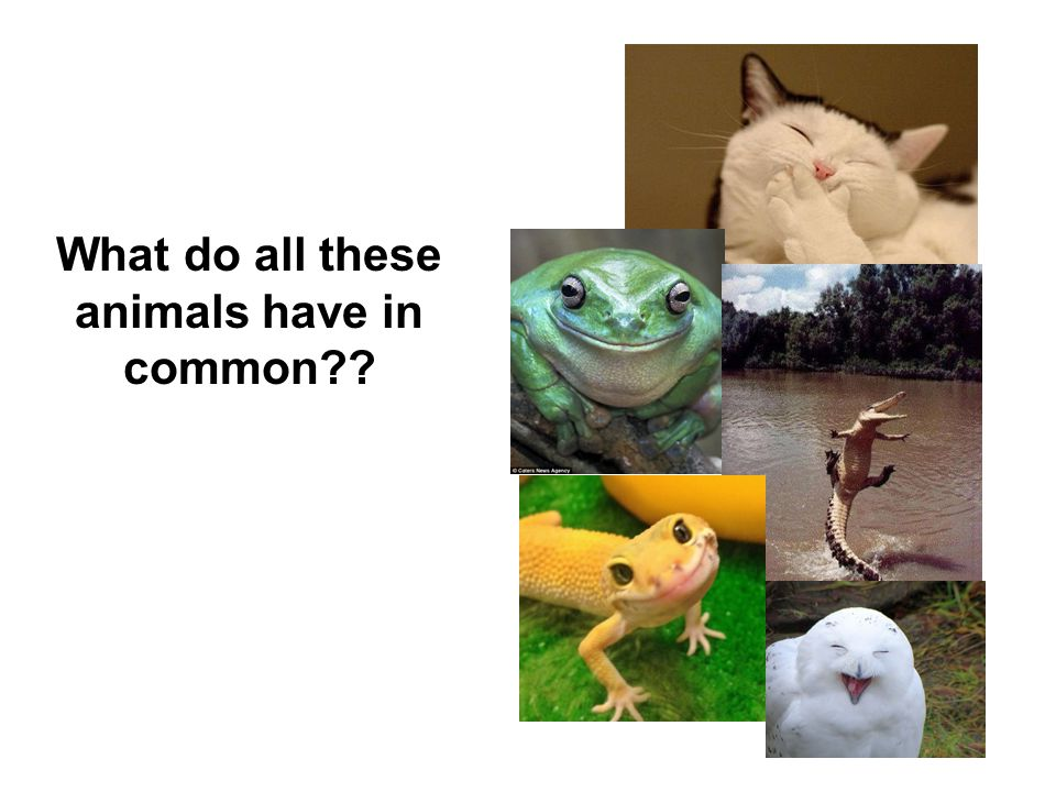 What do all these animals have in common??