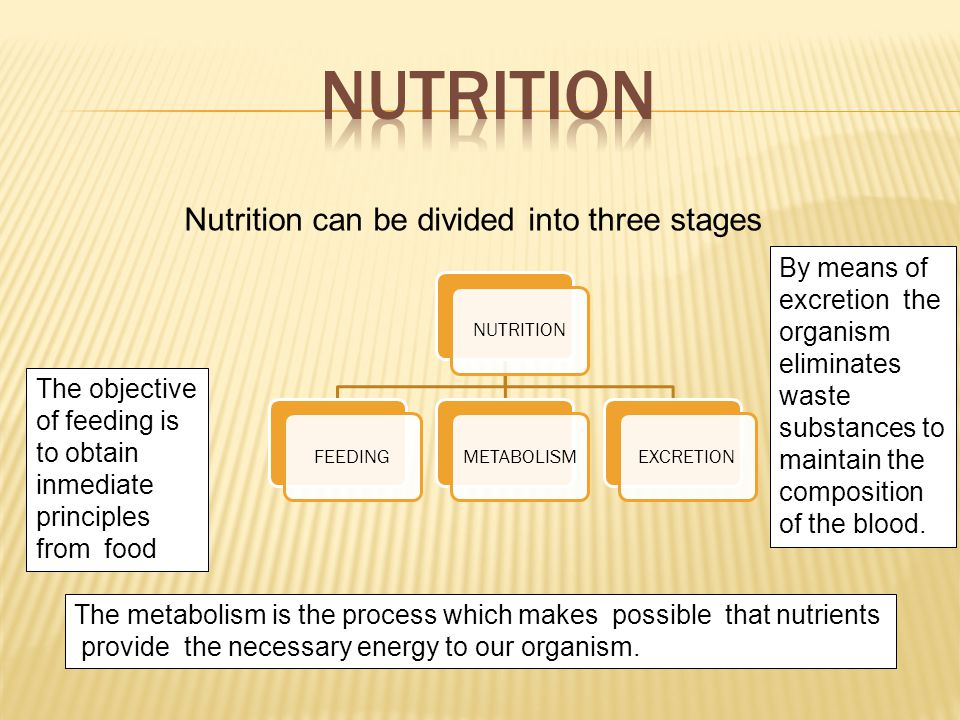 NUTRITIONFEEDINGMETABOLISMEXCRETION Nutrition can be divided into three stages The objective of feeding is to obtain inmediate principles from food The metabolism is the process which makes possible that nutrients provide the necessary energy to our organism.