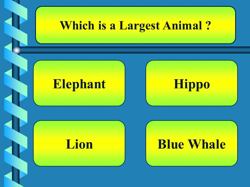 Which is a Largest Animal Elephant Blue Whale Hippo Lion