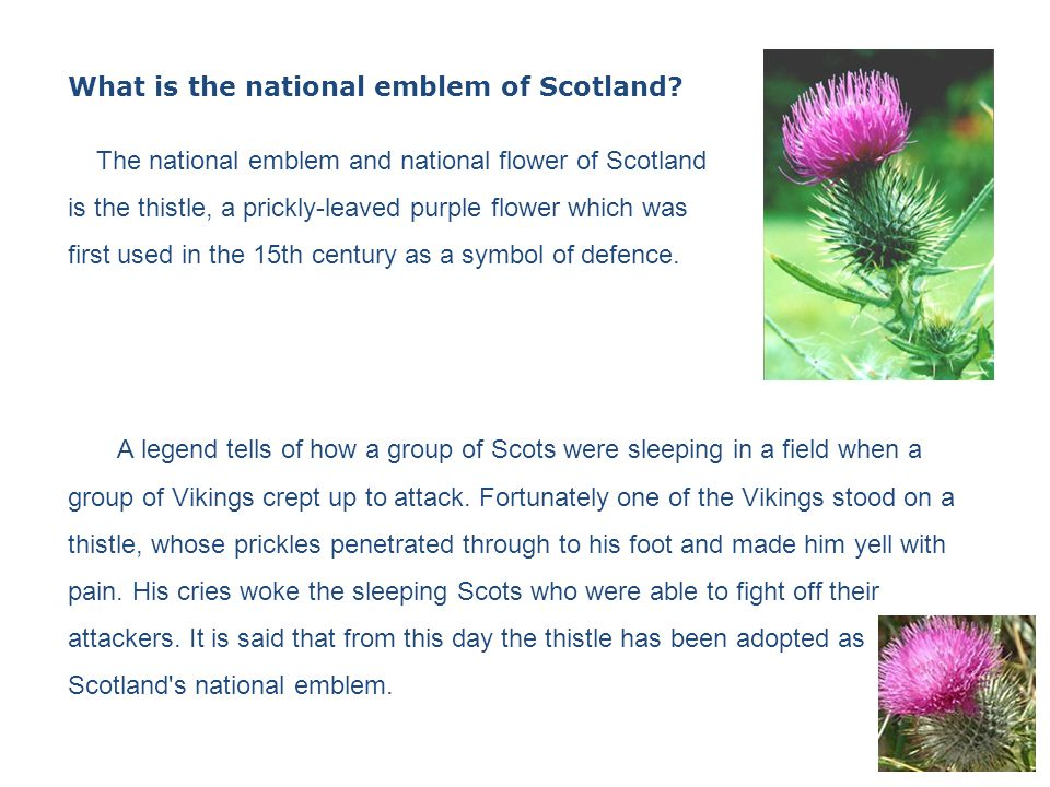 United Kingdom Scotland The National Day Of Scotland The Scottish