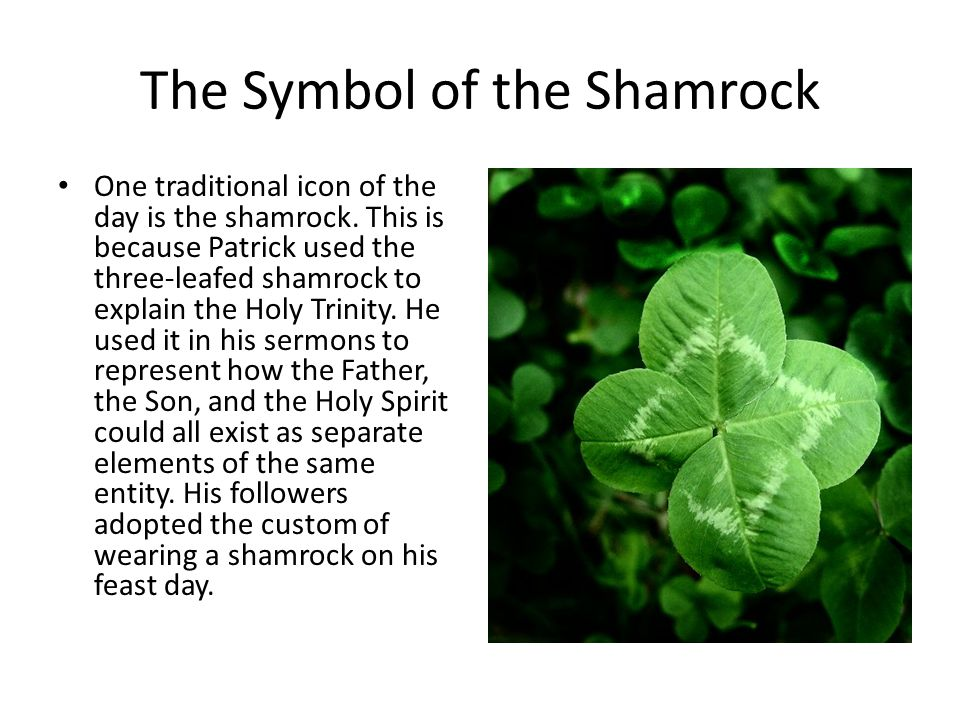 The Symbol of the Shamrock One traditional icon of the day is the shamrock.