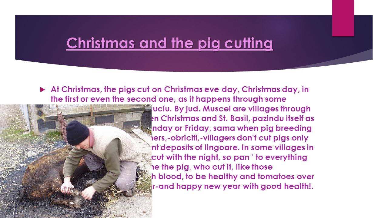 Christmas and the pig cutting  At Christmas, the pigs cut on Christmas eve day, Christmas day, in the first or even the second one, as it happens through some villages in the County.