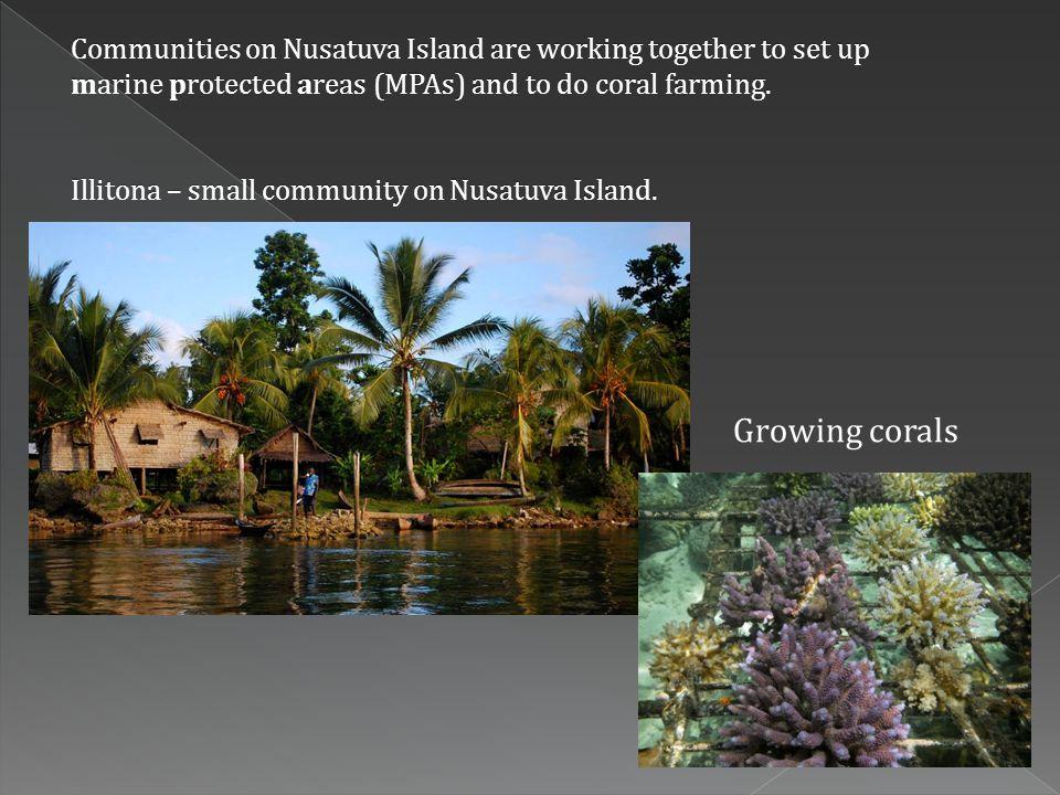 Growing corals