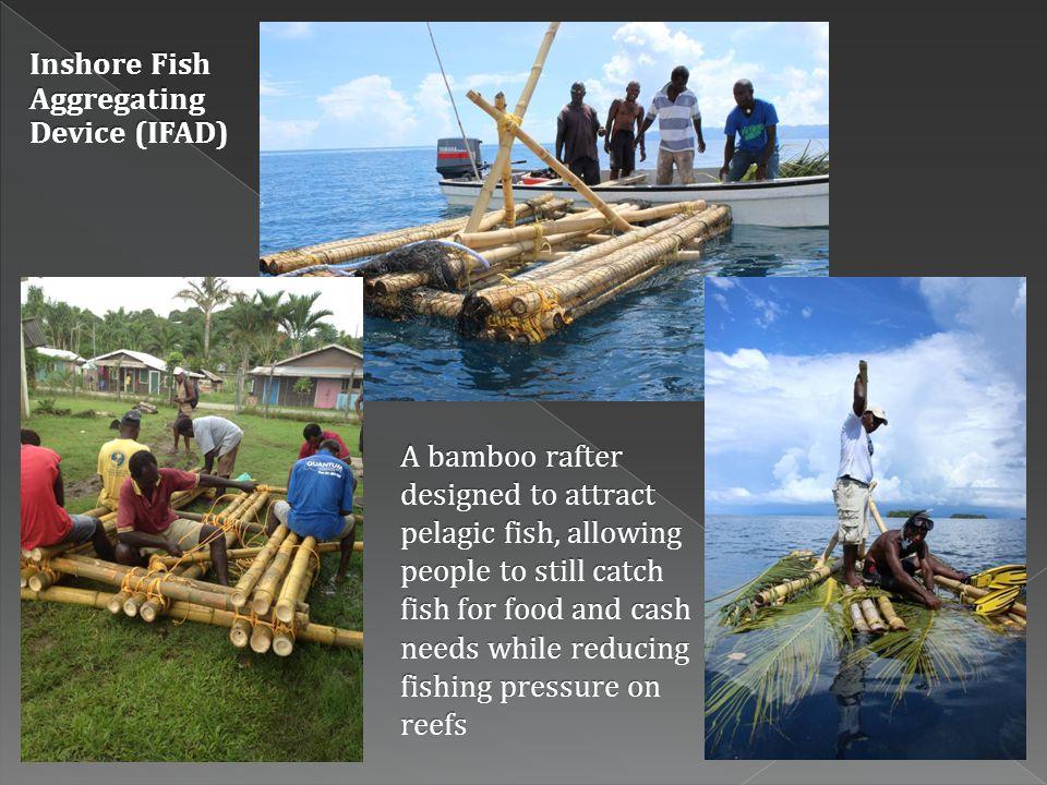 Inshore Fish Aggregating Device (IFAD)