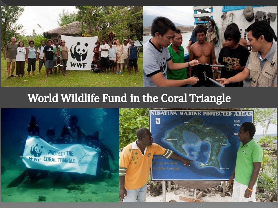  The Coral Triangle = WWF Priority Place  WWF working with people to help maintain food security and livelihoods through marine conservation:  Building sustainable fisheries  Preparing for climate change  Creating protected areas  Alternate livelihoods  Protecting marine turtles  Reducing bycatch