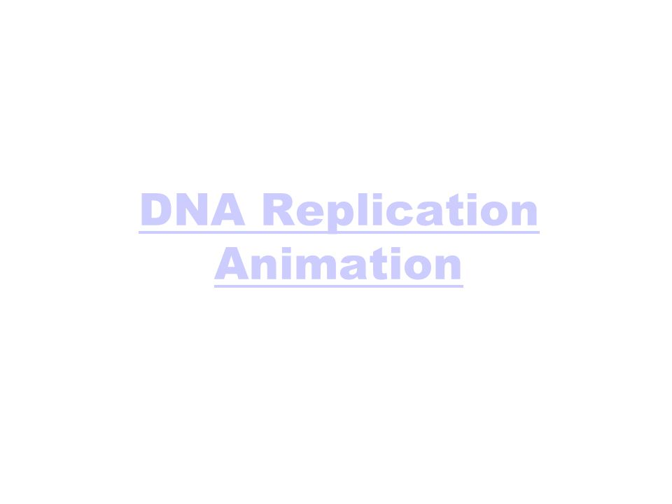 DNA Replication Animation