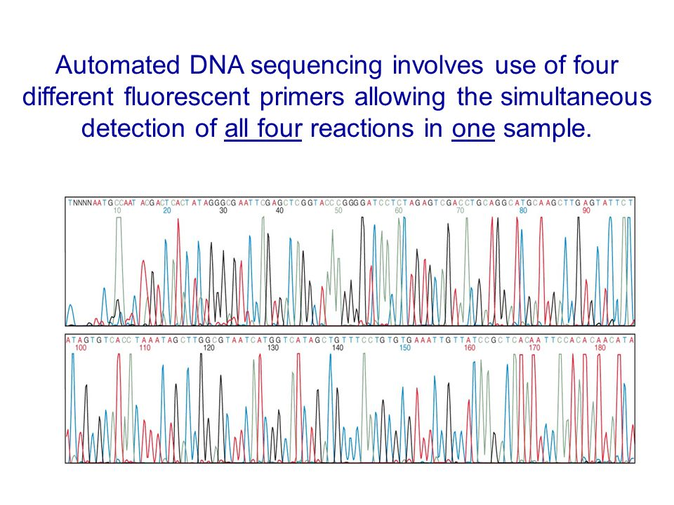 Automated DNA sequencing involves use of four different fluorescent primers allowing the simultaneous detection of all four reactions in one sample.